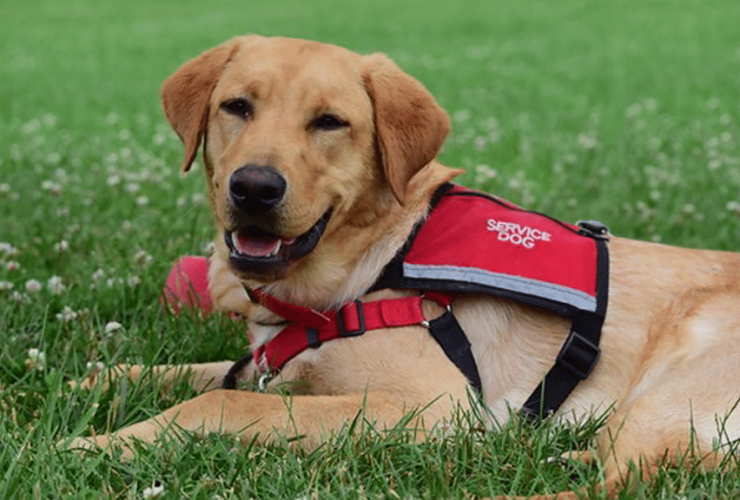 Service and Therapy Dog Programs