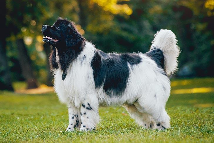 Pet Obedience Programs